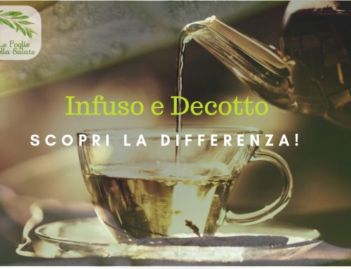 Infuso e decotto, scopri la differenza!